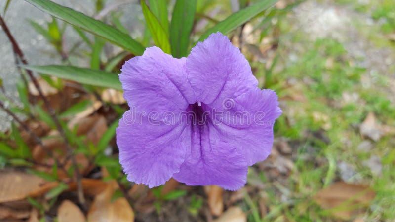 Resorte en la floración foto de archivo