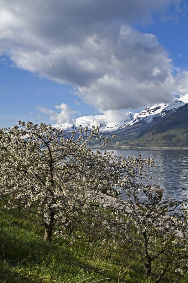 Download Resorte en Noruega foto de archivo. Imagen de costa, montañas - 41916308