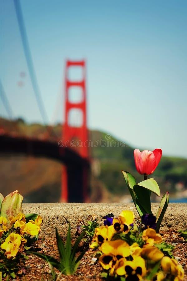 Resorte en San Francisco imagen de archivo