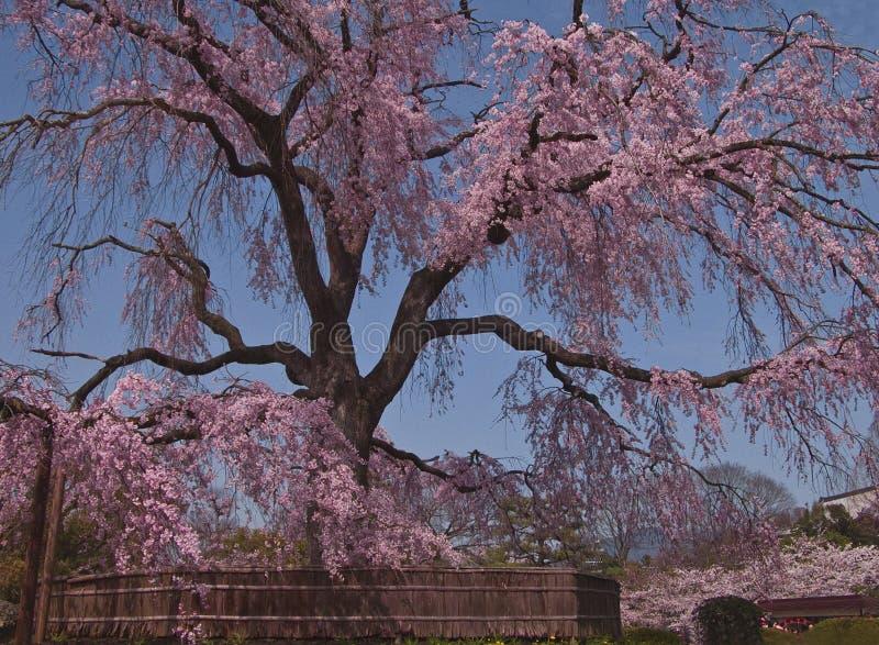 Resorte japonés hermoso imagenes de archivo