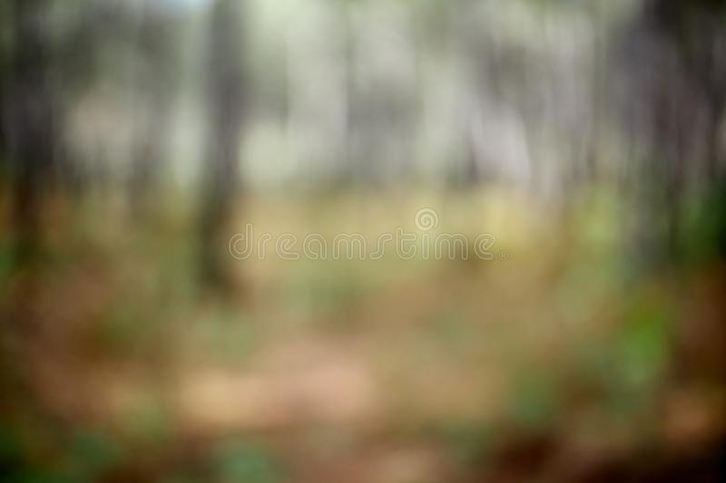 Defocused of a forest in autumn. Resource to edit as background royalty free stock images