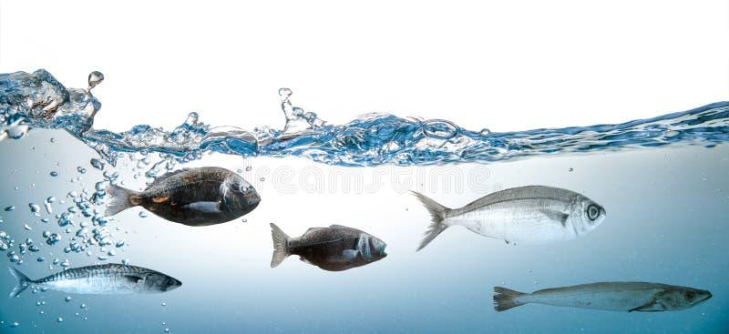 Respingo da água com os peixes no fundo branco fotos de stock