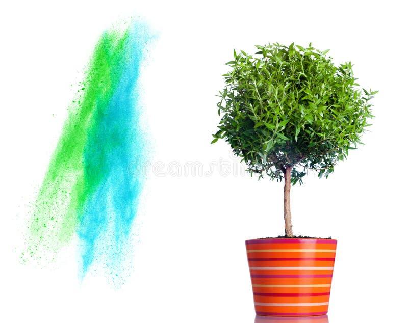 Respingo da árvore e do pó isolado no branco fotografia de stock royalty free