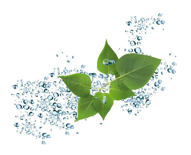 Respingo e folhas da água foto de stock