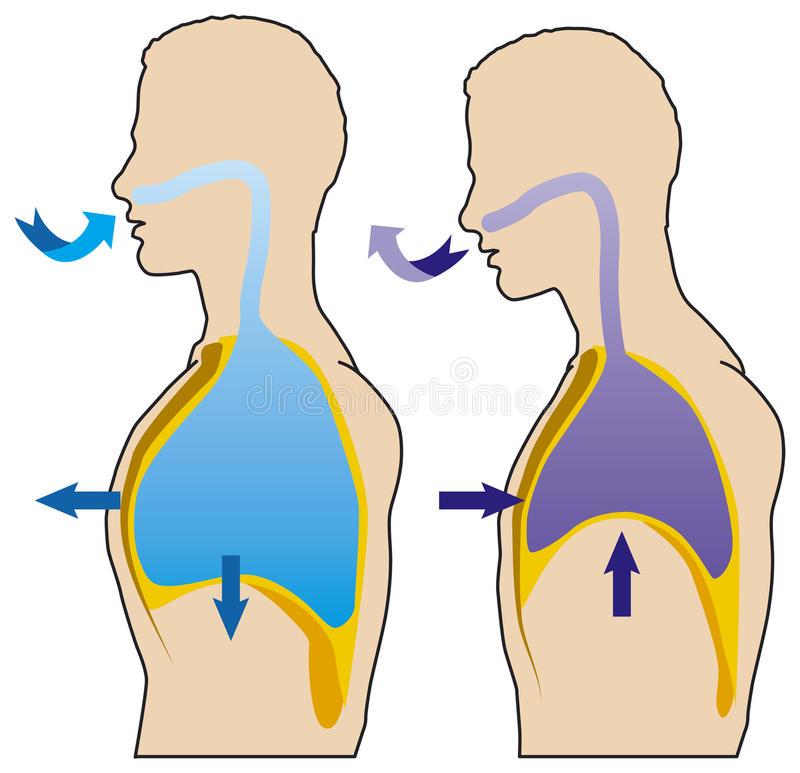 Respiração ilustração stock