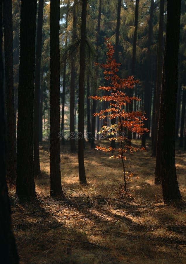 Respiración del otoño fotografía de archivo