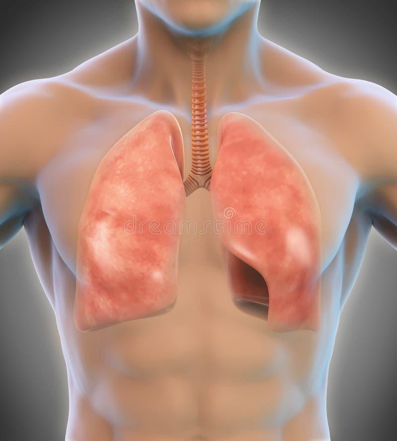 respiratoriskt system för digital mänsklig illustration stock illustrationer
