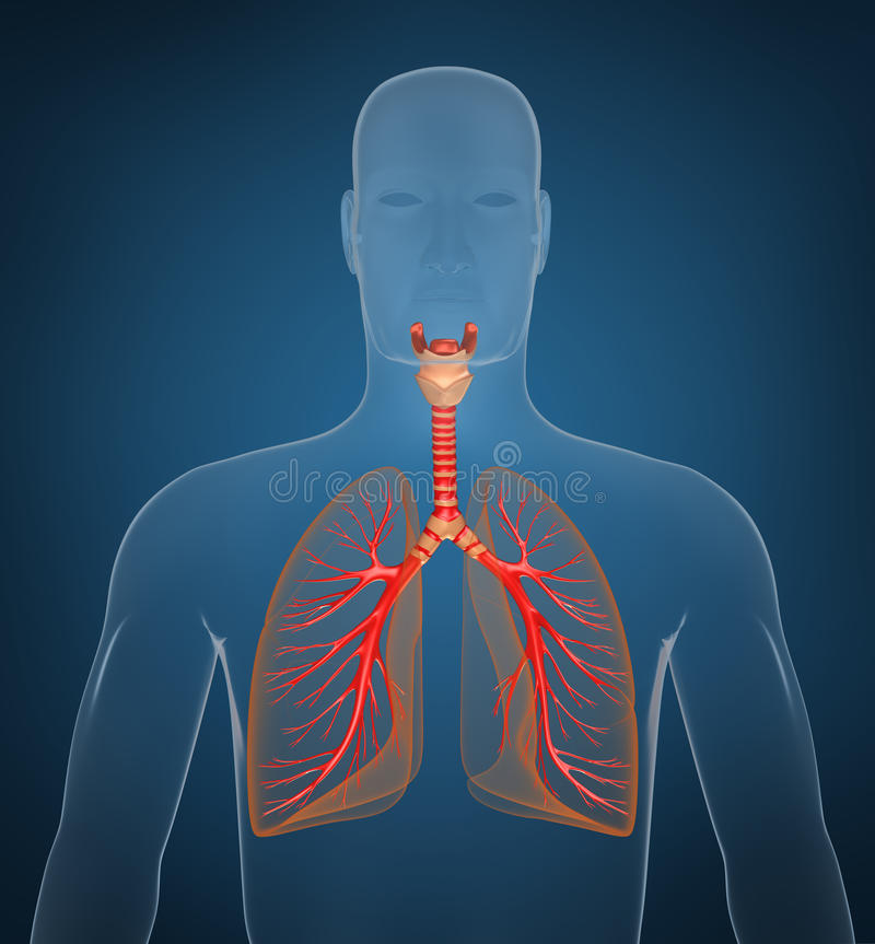 Download Respiratory System On Blue Background Stock Illustration - Image: 18940669