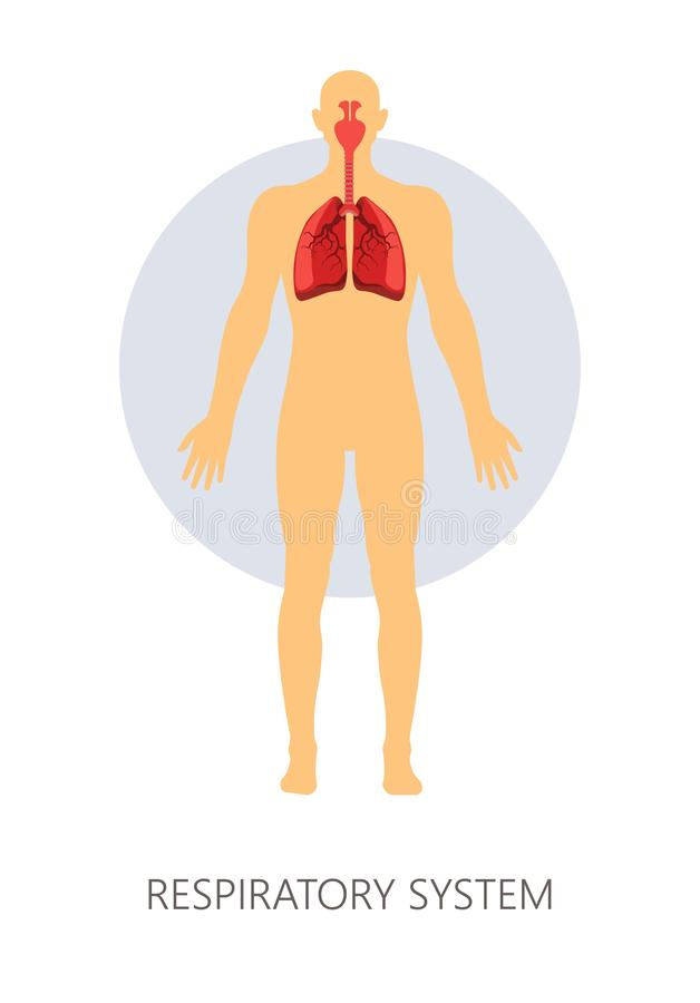 Respiratory system normal breathing lungs and trachea with nasa cavities. Breathing respiratory system isolated human anatomy vector lungs and trachea nasal stock illustration