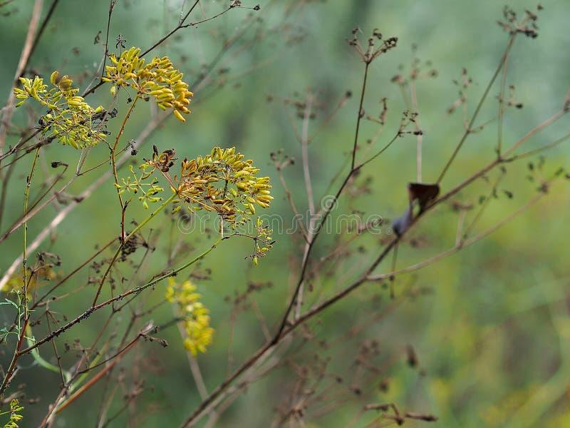 Respiro dell'autunno fotografia stock libera da diritti