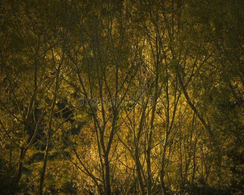 Resplandor de la sol en la puesta del sol fotos de archivo