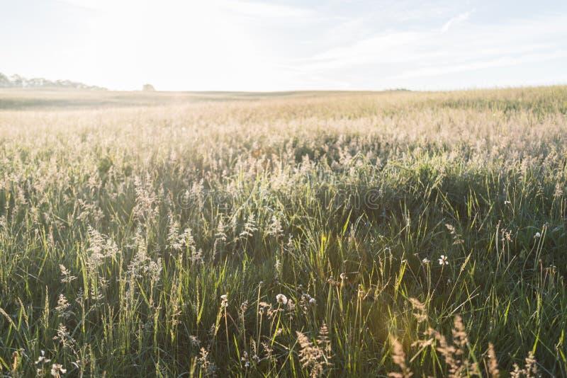 Resplandor de las hierbas en luz de la mañana fotos de archivo libres de regalías
