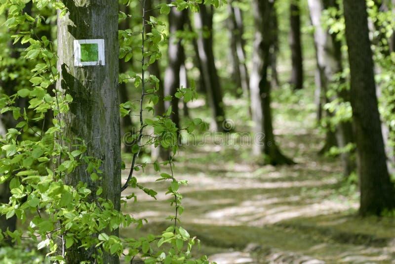 Resplandor en el bosque. fotos de archivo