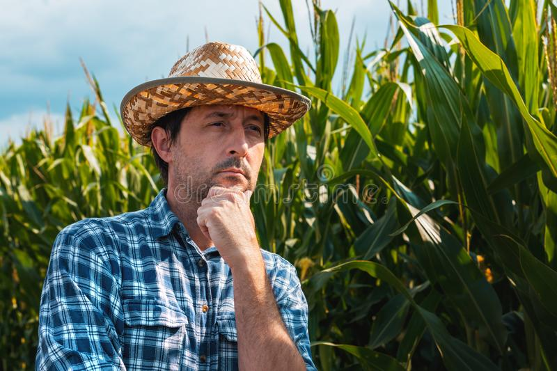 Responsible corn farmer in field thinking. With hand on chin after checking up on maize crop development stock photo