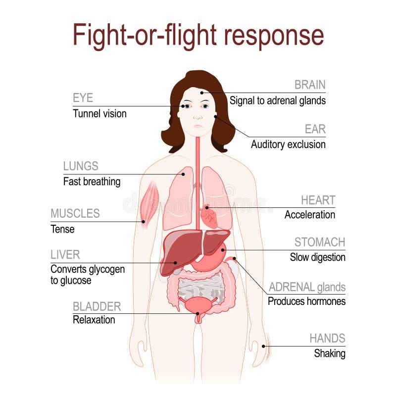 resposta do Luta-ou-voo Sistema da resposta do esforço ilustração royalty free