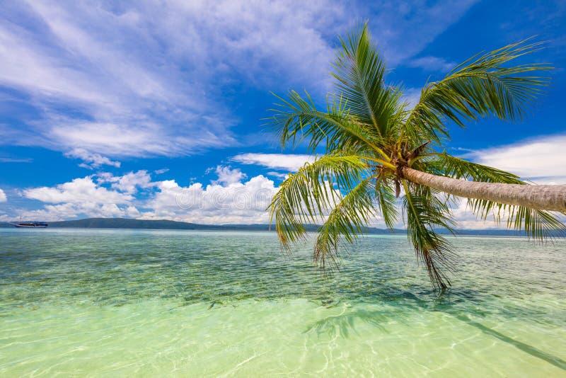 Ressaca tropical do mar calmo da praia, palmeira e céu azul - resto tropical idílico na costa da ilha imagens de stock royalty free