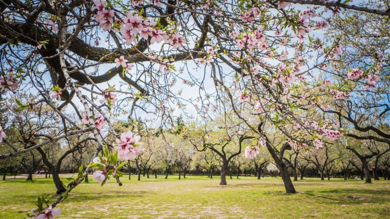Ressort à Madrid chez Quinta de Molinos Almonds Park photo libre de droits