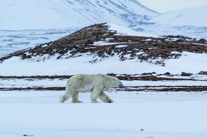 Ressort arctique dans le Spitzberg du sud Look polaire photographie stock libre de droits