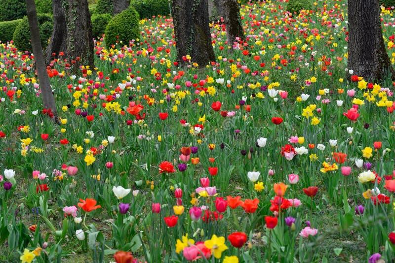 Ressort avec les fleurs colorées dans les bois photos stock