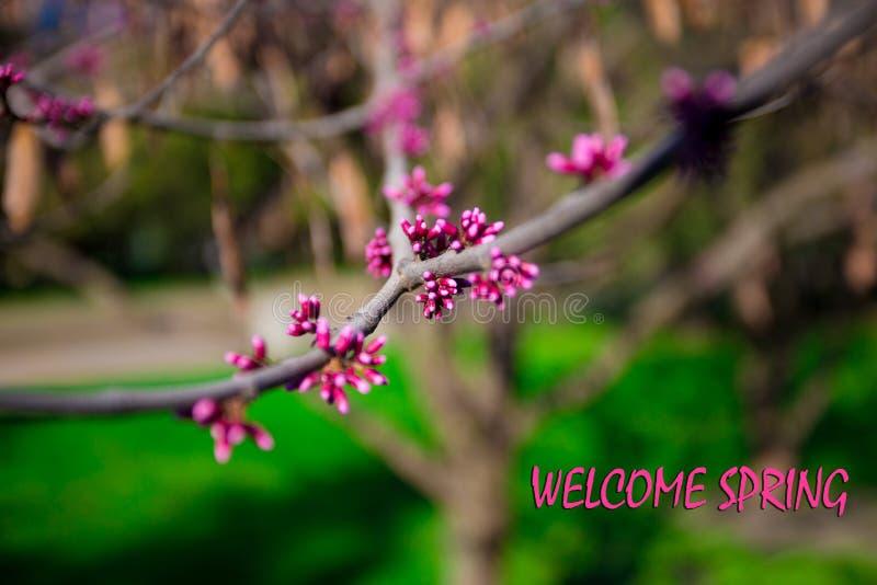 Ressort bienvenu, message avec la belle scène de nature photographie stock libre de droits