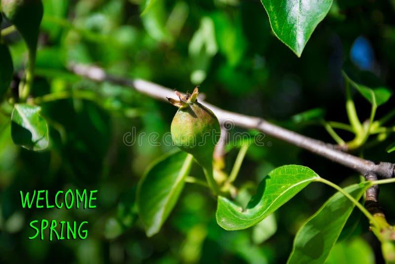 Ressort bienvenu, message avec la belle scène de nature de la poire verte photos stock