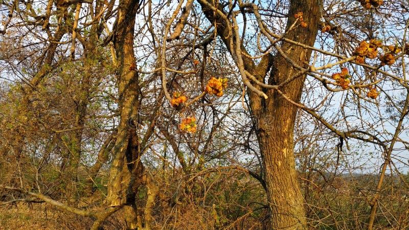 Ressort Bourgeons sur l'arbre Arbre de ressort contre le ciel bleu photographie stock