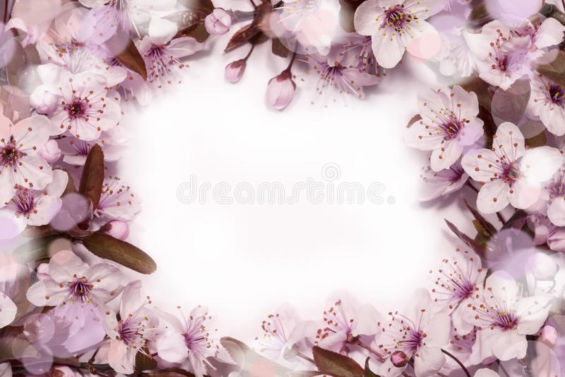 Ressort Cherry Blossom photos stock