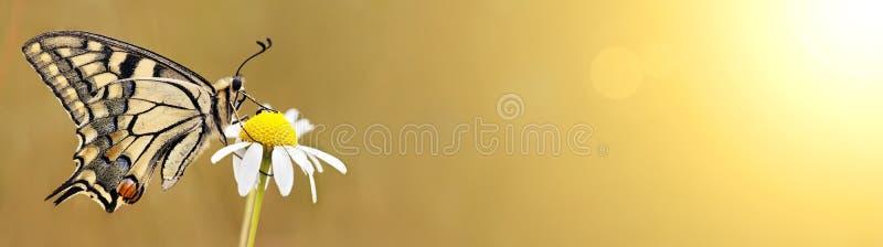 Ressort, concept d'été - bannière de papillon photos libres de droits
