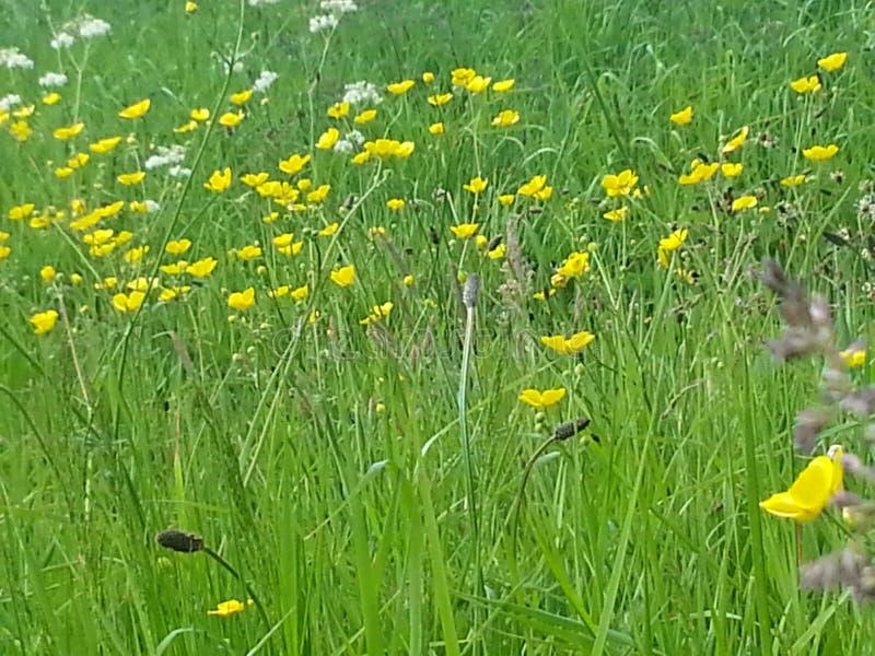 ressort dans l'herbe photos stock