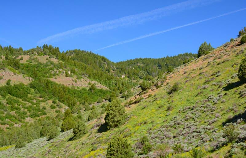 Ressort dans la réserve forestière de cachette - Utah du nord photos libres de droits