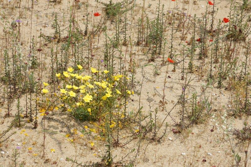 Ressort dans le désert 3 image libre de droits