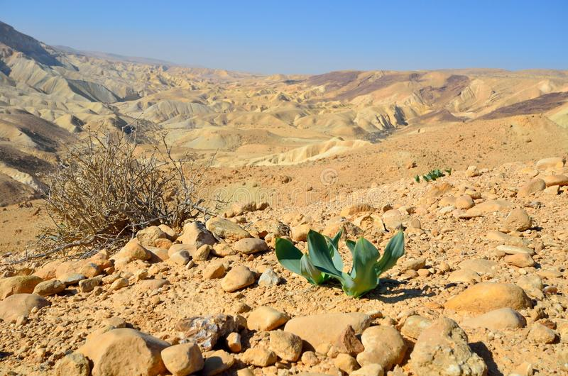 Ressort de désert photo libre de droits