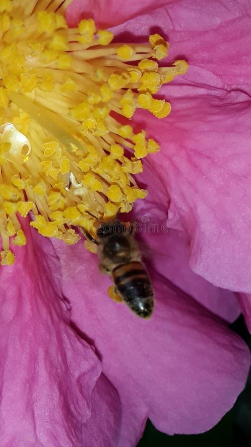 Ressort de fleur d'abeille photo stock