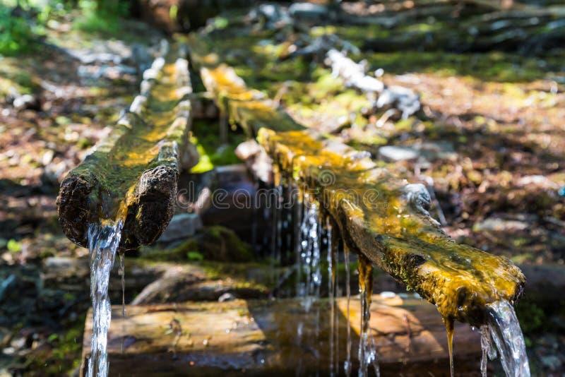 Ressort de forêt, le lac Baïkal photographie stock libre de droits