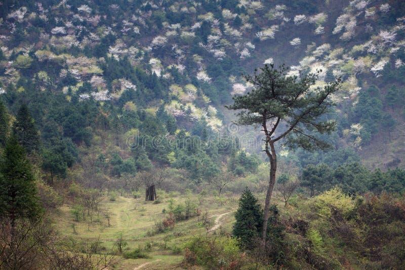 Ressort de Hunan images libres de droits