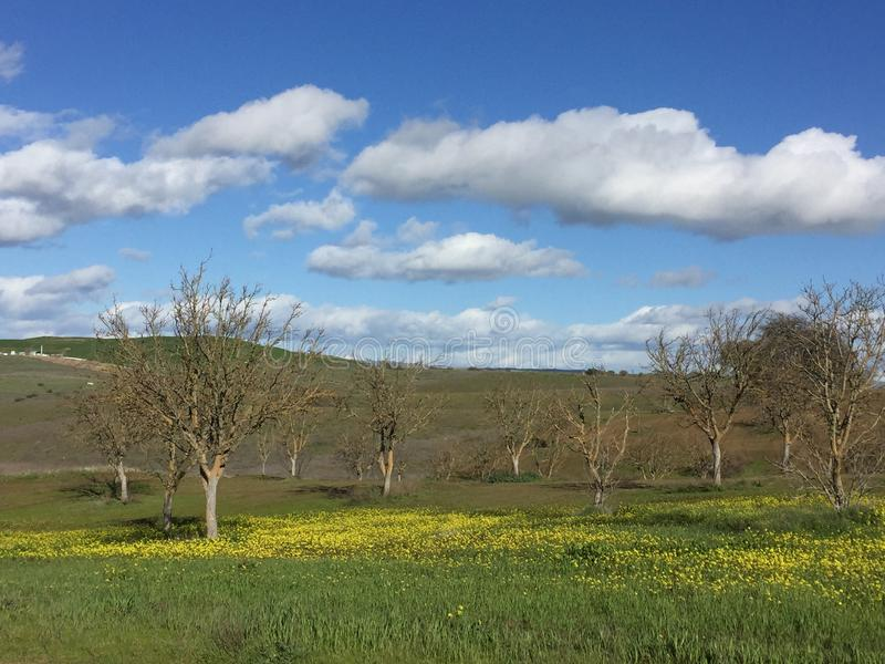 Ressort de Paso Robles - cieux bleus, fleurs sauvages jaunes, herbe verte et un verger images libres de droits