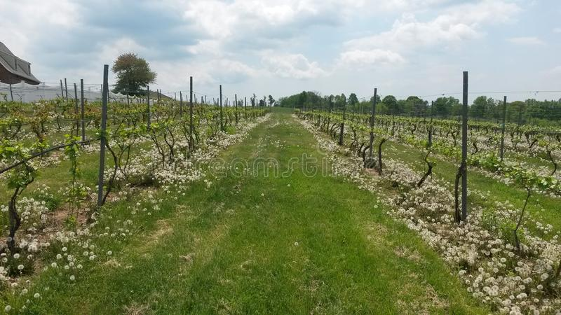 Ressort de vignoble photo stock