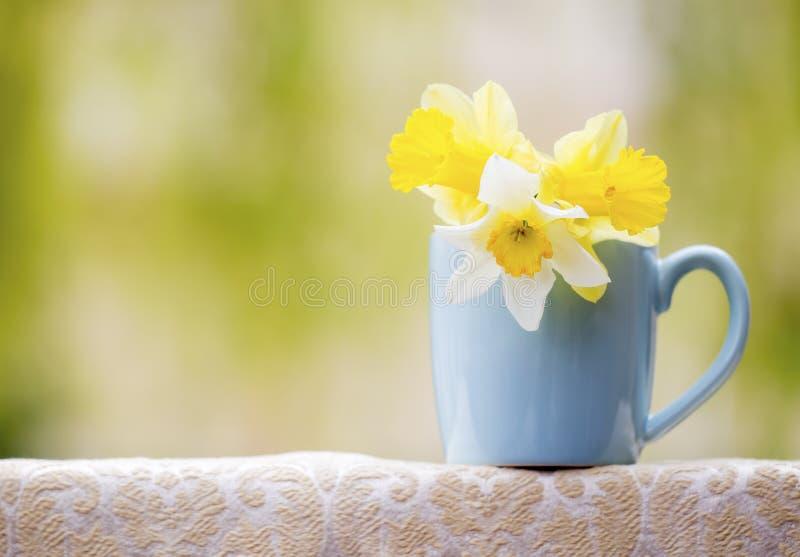 Ressort en avant, concept de printemps, fleurs de jonquille de Pâques images libres de droits