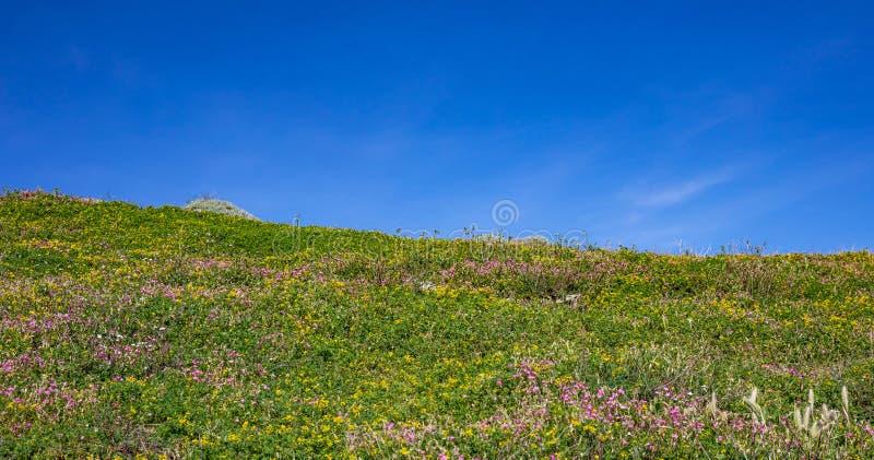 Ressort en Grèce Petites fleurs sauvages colorées sur l'herbe verte, fond clair bleu de ciel, bannière photo stock