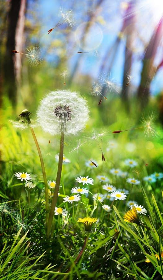 Ressort et concept allergique photographie stock