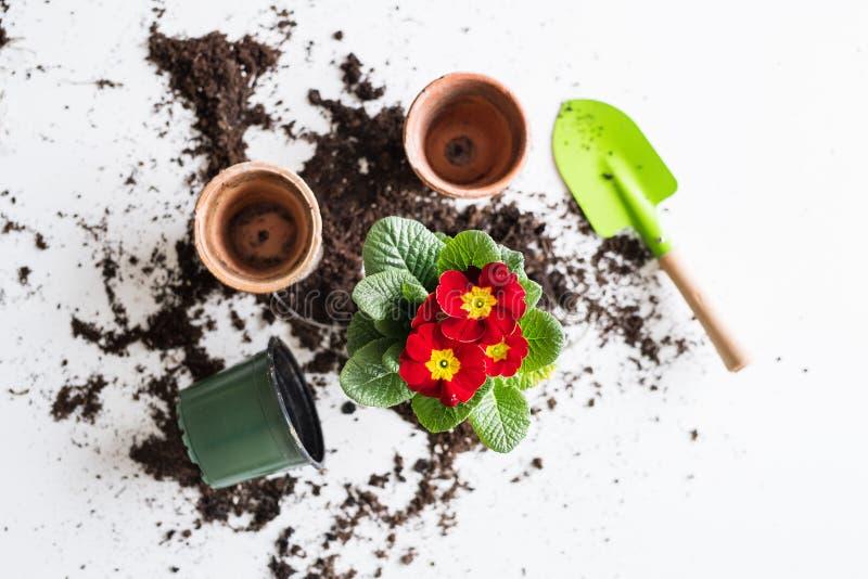 Ressort et plantation de la configuration d'appartement de jeunes plantes Vue supérieure image libre de droits
