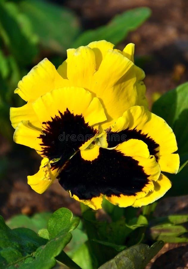 Ressort flower.2 jaune image stock