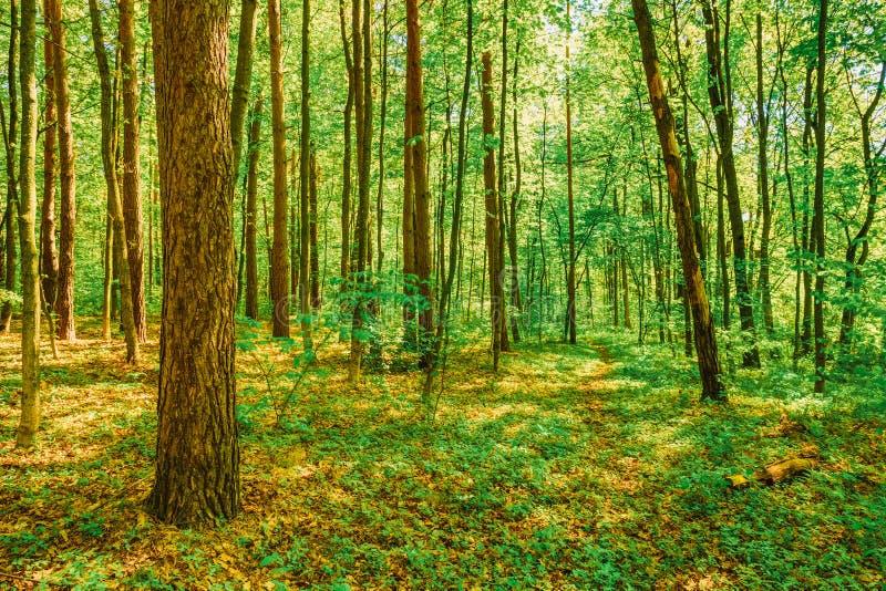 Ressort Forest Woods à feuilles caduques vert Nature de source photos stock