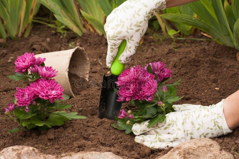 Ressort plantant des fleurs sur la fleur de fleur photos libres de droits