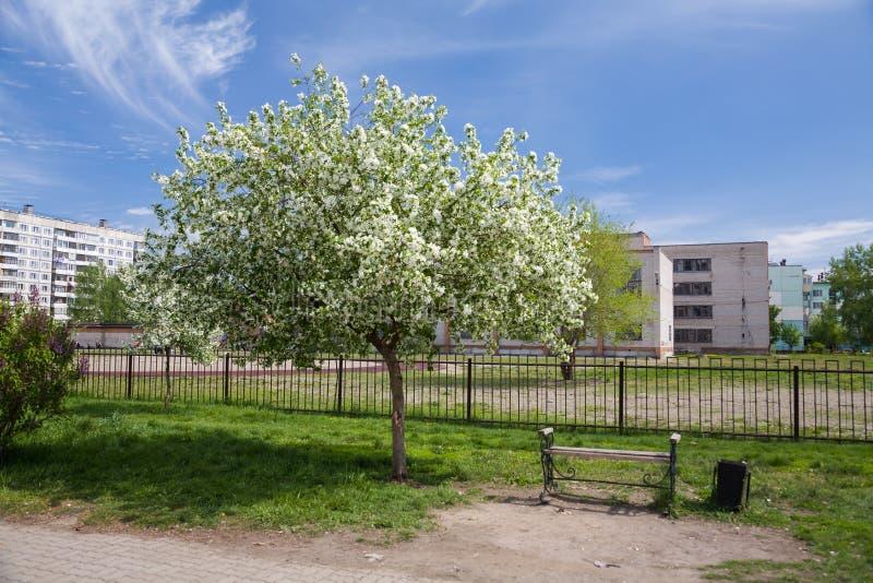 Ressort Pommier de floraison dans la ville bench images libres de droits