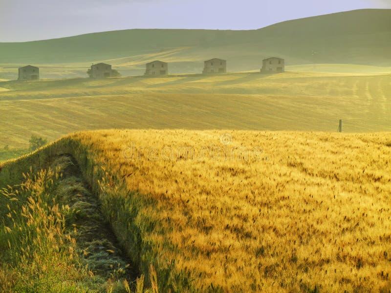 Ressort rural de paysage Entre Pouilles et Basilicate : champ de blé à l'aube l'Italie photo libre de droits