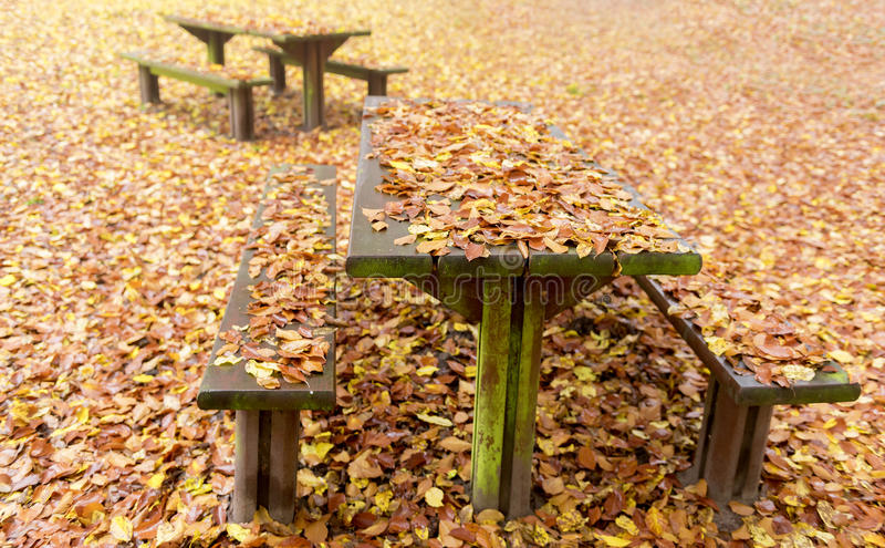 Rest area. Wooden benches and tables covered with dead leaves in a rest area stock photography