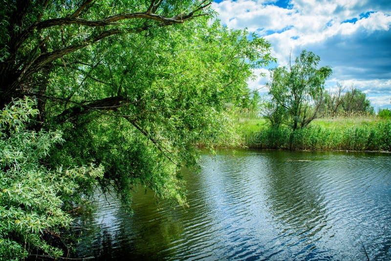 Rest auf der Flussbank in einem Naturpark stockbild
