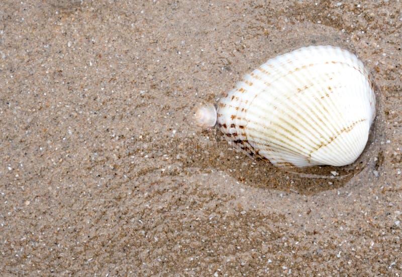 Rest overzeese shell op zandstrand royalty-vrije stock afbeeldingen