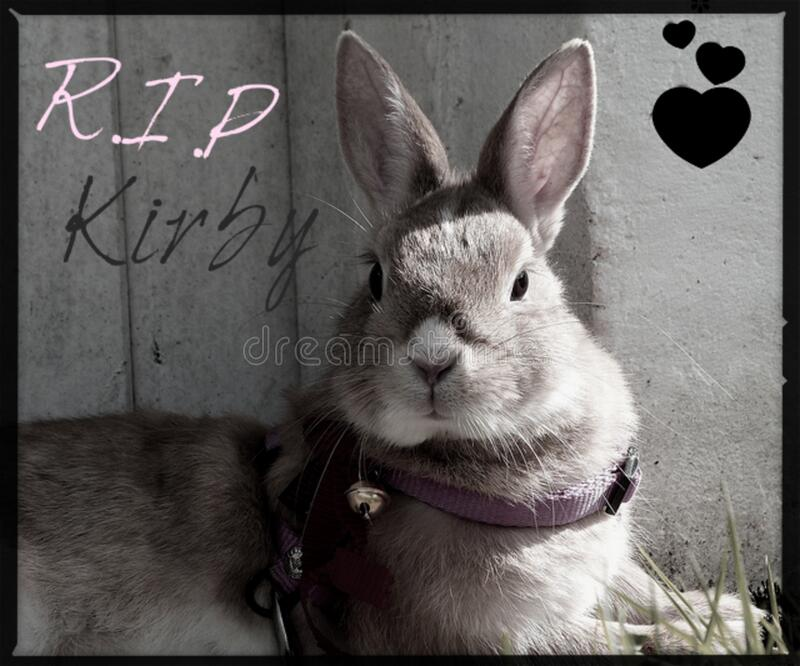 Im With Zombies We Cannot Rest In Peace >> Rest In Peace Kirby Picture Image 86178572